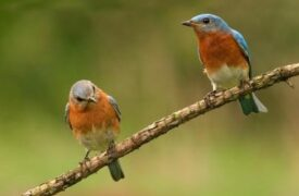 Birding Delights