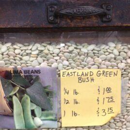 Eastland Green Bush Lima Bean