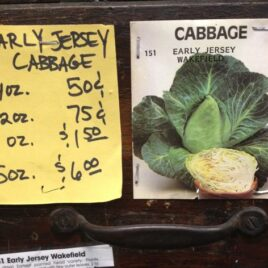 Early Jersey Cabbage