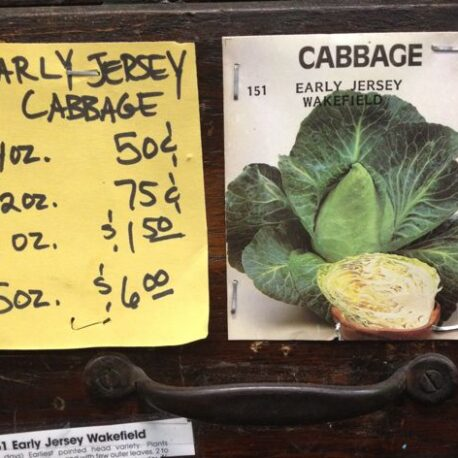 jersey cabbage