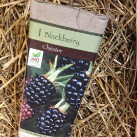 Chester Blackberry
