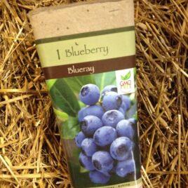 Blueray Blueberry