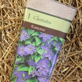 Clematis – Ramona