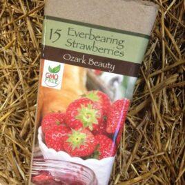 Everbearing Ozark Beauty Strawberries
