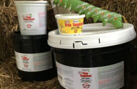 Tanglefoot supplies for cankerworm banding