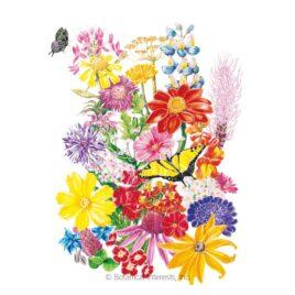 Botanical Interests Flower Seed Packs