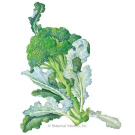 Botanical Interests Vegetable Seed Packs